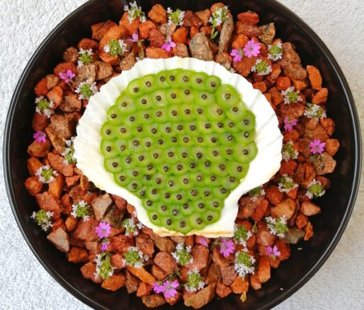 Duo de tartare Saint-Jacques et esturgeon et caviar de neuvic