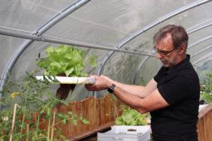 Les plantes cultivées dans la serre sont principalement des salades, des tomates et des plantes aromatiques.